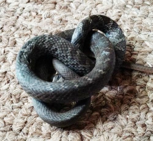 snakeinhouse